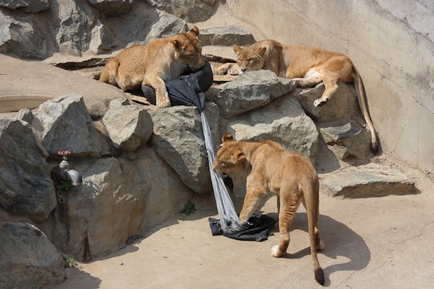 zoo-jeans-distressed-denim (3)