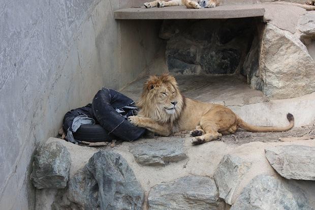 zoo-jeans-distressed-denim (7)