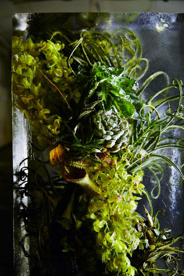 iced-flowers-makoto-azuma (9)