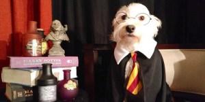 The Ten Best Harry Potter Trivia Team Names