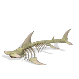 great white shark food chain diagram 2002 nissan pathfinder engine diagram, great, free image for user manual download