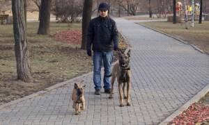 Прогулка без поводка - укрепление контакта