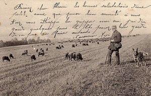 Belgian Shepherd Dog, 1900
