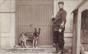 PORTHOS, Chien Policier, race Loup Belge