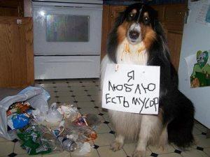 Наказание собаки
