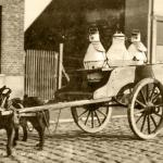 Молочник с бельгийской овчаркой