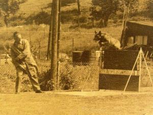 Испытания в Королевском клубе дрессировки муниципании Анденн, Бельгия, 1960-70е гг.