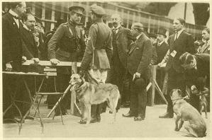 Король Бельгии Альберт I на Международной выставке в Антверпене (1920 г.) беседует с лейтенантом Жоржем Дюпюи (основателем питомника Bas-Jardins). Рядом малинуа VIC (LOSH 9490)