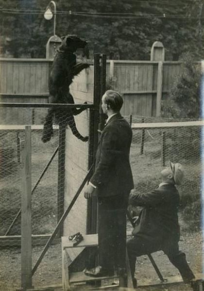 Состязания по дрессировке в 1931 г. (Presse Meurisse Expo)