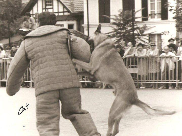 Oural du Colombophile (1968, LOSH 170826) - финалист чемпионата Швейцарии по программе защитной службы