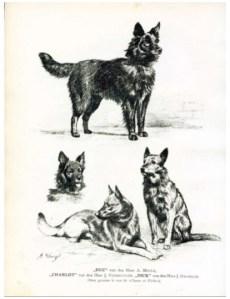 Скетч ранних бельгийских овчарок