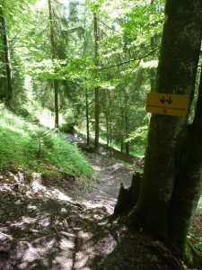 Bei Fliegern gilt runter kommen sie immer, beim Downhill stimmt das nur bedingt!