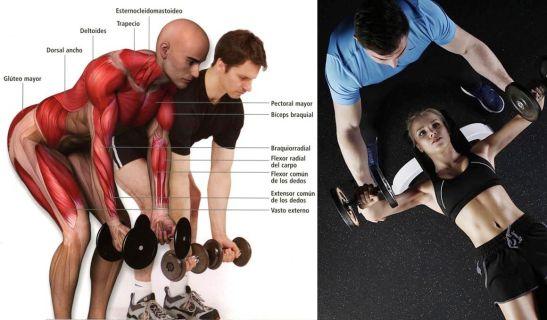 La anatomía del deportista