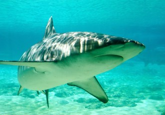 Avvisi contro gli squali in Australia