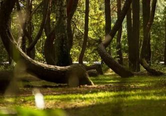 Foreste suggestive in Europa