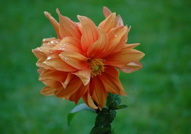 6 piante ornamentali antizanzare