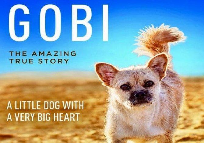 Gobi_libro