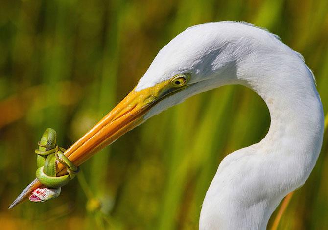 bird-photographer-of-the-year-airone-jose-garcia