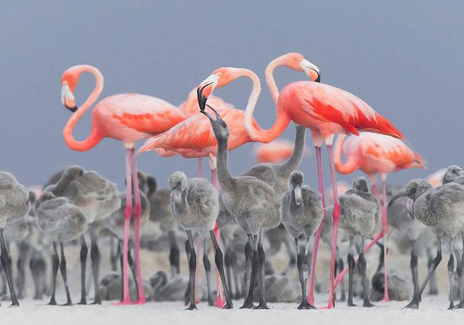 bird-photographer-of-the-year-fenicotteri-rosa-alejandro-prieto-rojas