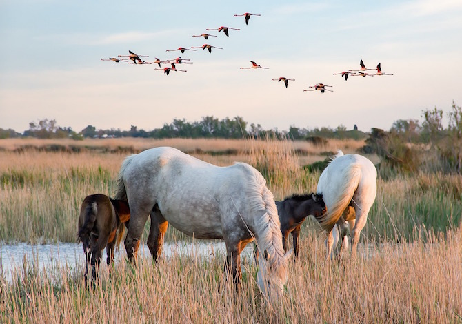 camargue-cavalli-photoXtianDuGard-pixabay