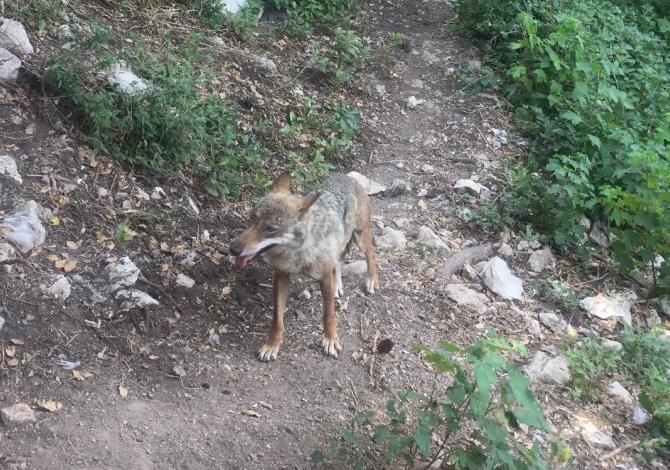 parco-abruzzo-lupo
