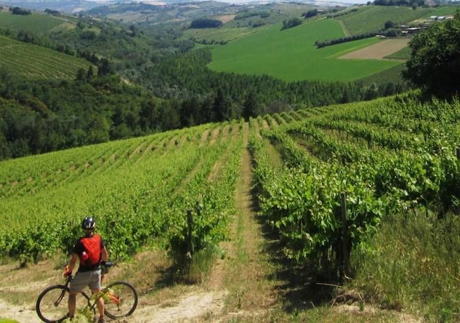 bici-marche-vie-del-vino