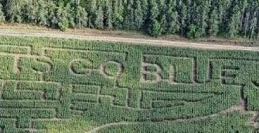 toronto-blue-jays-corn-maze-crop