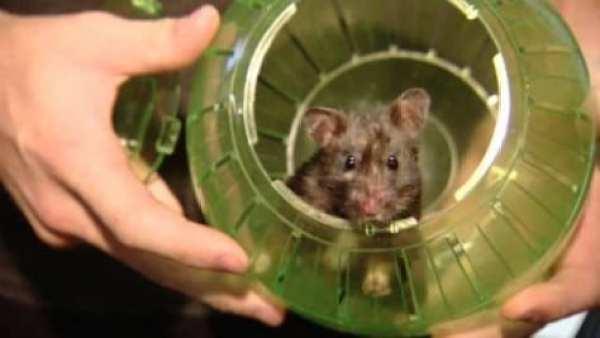 slider-hamster