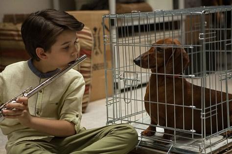 Wiener Dog 1