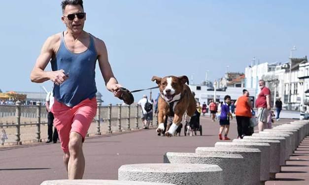 Perros y Running