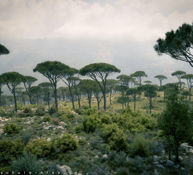 Libanon 2017 Mediterenean Open-1670