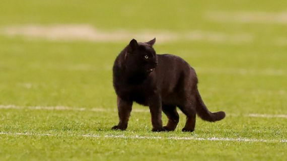 Black Cat from MNF Still on the Loose at MetLife Stadium