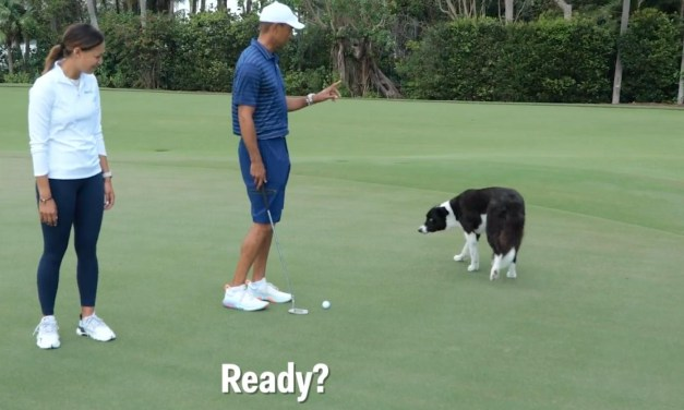 Tiger Woods Introduces Us to His Golf Ball Fetching Dogs
