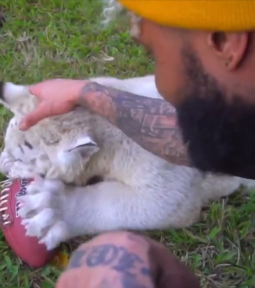 PETA Releases a Statement on Odell Beckham Playing Football with a Chimpanzee and Big Cats