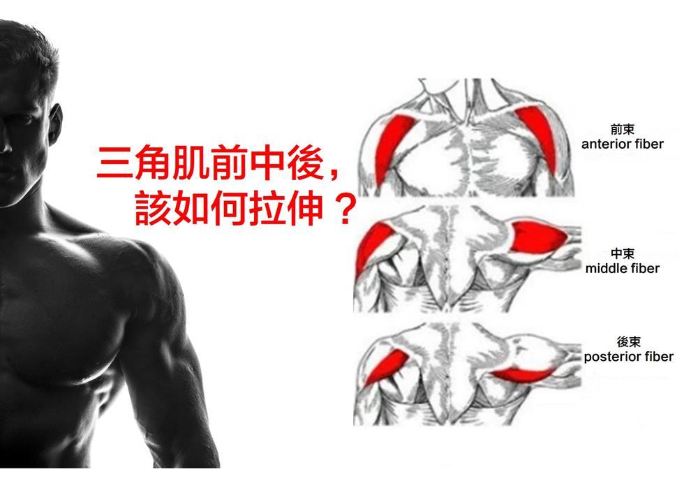 三角肌前中後束該如何拉伸 才能有效放鬆肩部肌肉 | 運動星球 sportsplanetmag