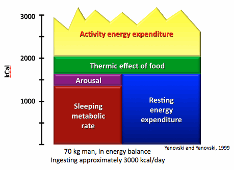 Components-of-energy-expenditure