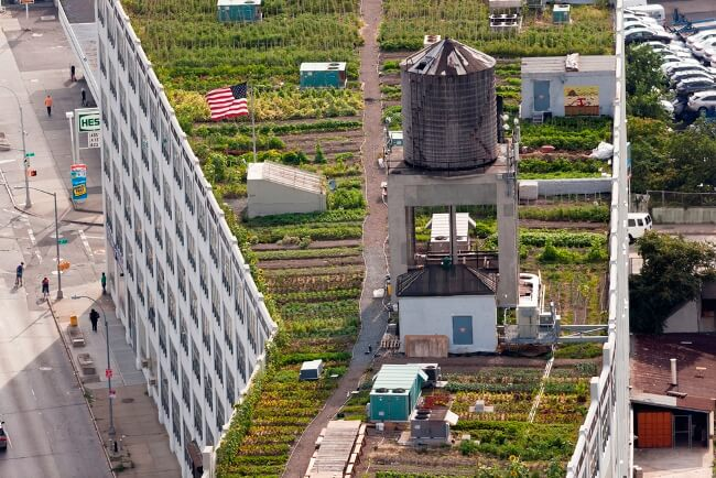 Brooklyn Grange, a one acre urban farm where gardeners work around a watertower and airconditioning units