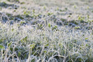 Pre-Winter Maintenance for Your Lawn Sprinkler System