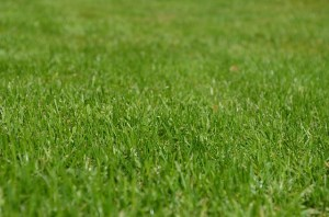 3 Benefits of Regular Lawn Maintenance
