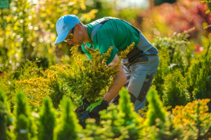 Services a Landscape Contractor Can Offer in Fall