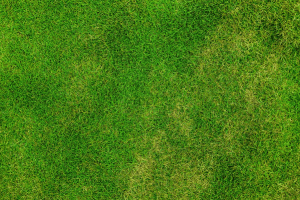 Keeping Your Lawn in Good Shape During Cooler Weather