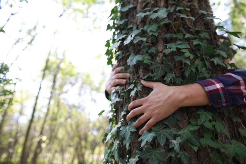 enlacer un arbre