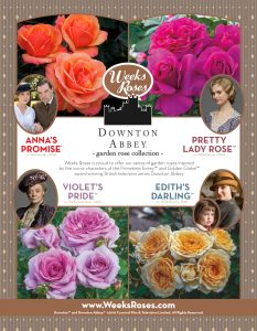 Downton-Abbey-roses