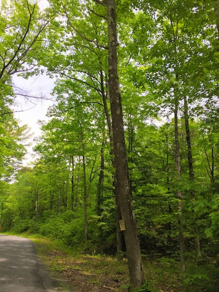 RarrickRd_spring forest Selkirk