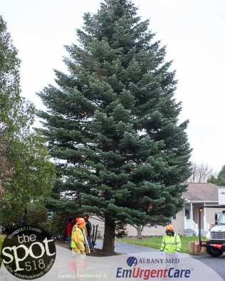 tree-5980