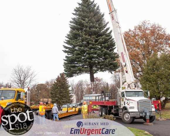 tree-6152