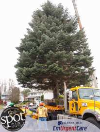 tree-6193
