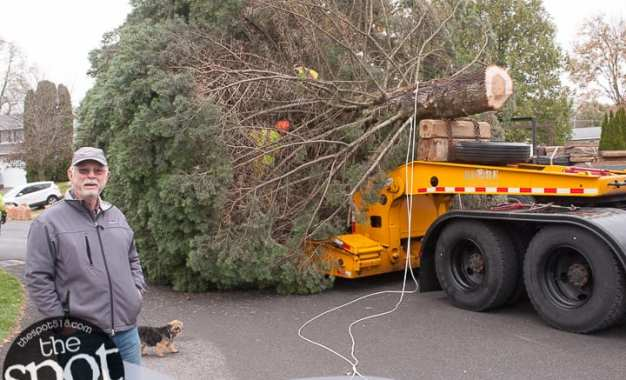 SPOTTED: Colonie family donates state Christmas Tree