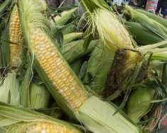 farmers Mkt web-9362