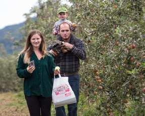 apples web-4852